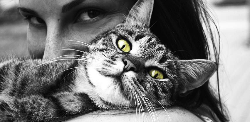 hugcat