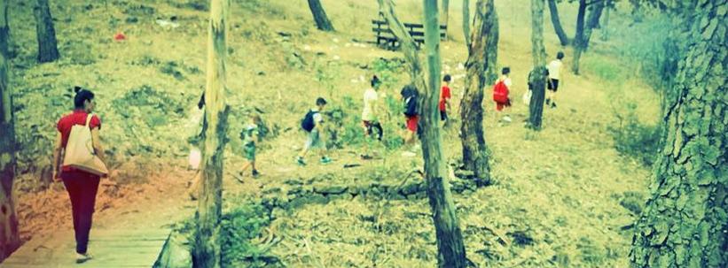 schoolforest